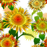 Seamless pattern with sunflowers Stock Photography