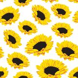 Seamless pattern of sunflowers. Seamless pattern with sunflowers on white background. Vector eps 8 Royalty Free Stock Photos