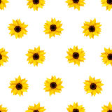 Seamless pattern with sunflowers on white. Vector illustration. Stock Photo