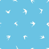 Seamless pattern - swallow birds Royalty Free Stock Photography