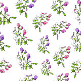 Seamless pattern with sweet pea Royalty Free Stock Images