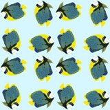 Seamless pattern from swimming fishes. Emperor angelfish. Pomacanthus imperator. Coral fish Royalty Free Stock Photos