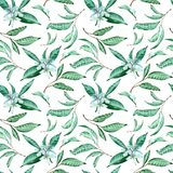 Seamless pattern of tangerine flowers and leaves on white background. Watercolor tropical background. stock illustration