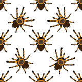 Seamless pattern with . tarantula spider Brachypelma smithi hand-drawn tarantula spider Brachypelma smithi. Vector Royalty Free Stock Image