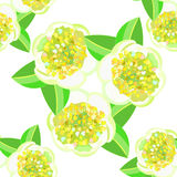 Seamless pattern with tea bush or Camellia Chinese. vector illus Stock Image