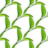 Seamless pattern with tea leaves stock illustration