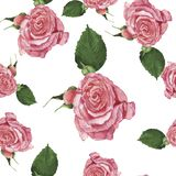 Seamless pattern with tender rose pink flowers. Watercolor illustration. vector illustration