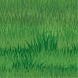Seamless pattern - texture of grass Stock Photography