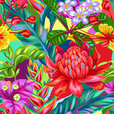 Seamless pattern with Thailand flowers. Tropical multicolor plants, leaves and buds Stock Image