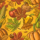 Seamless pattern for Thanksgiving Day. Vintage engraving Stock Photos