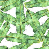 Seamless pattern thicket of palm leaf Banana. Seamless pattern thicket realistic watercolor Banana palm leaves isolated on white stock illustration