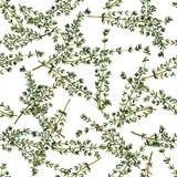 Seamless pattern thyme. Stock Photo