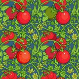 Pattern of tomato branch in a garden. Red and green. Royalty Free Stock Photos