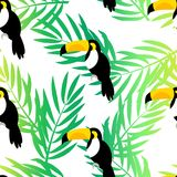 Seamless pattern with toucan and palm branches on white background. Vector summer background.  Stock Image