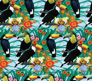 Seamless pattern with toucans and flowers. Hand. Drawn Royalty Free Stock Images