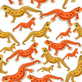 Seamless pattern Triton East American red spotted salamanders  Royalty Free Stock Images