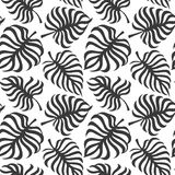 Seamless pattern with tropic leaves of monstera. On white background. Vector Royalty Free Stock Photography