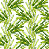 Seamless pattern with tropic plants Stock Photography
