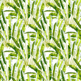 Seamless pattern with tropic plants Royalty Free Stock Photography