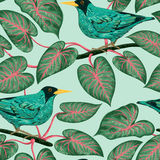 Seamless pattern with tropical birds and plants. Exotic flora and fauna. Vintage hand drawn vector illustration in watercolor style Stock Photos