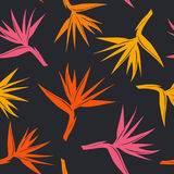 Seamless pattern with tropical exotic flower bird of paradise in orange yellow, red colors. On black background stock illustration