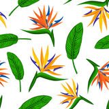 Seamless pattern with tropical exotic flower bird of paradise, strelitzia and leaves. Floral plant foliage repeatable endless texture Stock Photo