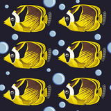 Seamless pattern. tropical fish. Royalty Free Stock Photography
