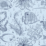 Seamless pattern with tropical fish, marine plants and seaweed. Vintage hand drawn vector illustration marine life. Royalty Free Stock Images