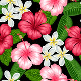 Seamless pattern with tropical flowers hibiscus and plumeria. Background made without clipping mask. Easy to use  Stock Photography