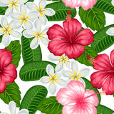 Seamless pattern with tropical flowers hibiscus and plumeria. Background made without clipping mask. Easy to use  Stock Photo