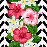 Seamless pattern with tropical flowers hibiscus and plumeria. Background made without clipping mask Stock Image