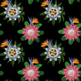 Seamless Pattern with Tropical Flowers Royalty Free Stock Photo