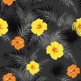 Seamless pattern with tropical leaves and paradise yellow, orange hibiscus flowers. Black and white palm leaves on the dark and colored flowers background Royalty Free Illustration