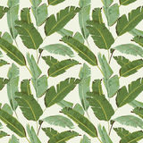 Seamless Pattern. Tropical Palm Leaves Background. Banana Leaves Stock Image
