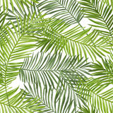 Seamless Pattern. Tropical Palm Leaves Background Stock Photography