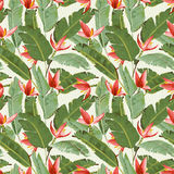 Seamless Pattern. Tropical Palm Leaves and Flowers Background Stock Image