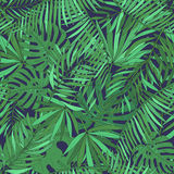 Seamless pattern with tropical palm leaves. Green exotic background. Royalty Free Stock Photography