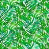 Seamless pattern with tropical palm leaves Royalty Free Stock Photography