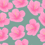 Seamless pattern of tropical pink hibiscus flowers. On a green background Stock Photos