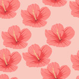 Seamless pattern of tropical pink hibiscus flowers. On a light background Stock Photo