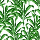 Seamless pattern with tropical plant leaves. Natural rainforest vector illustration