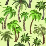 Seamless pattern with Tropical plants royalty free illustration