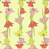 Seamless pattern with tulips Royalty Free Stock Images