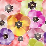 Seamless pattern Tulips flowers. Vector, EPS 10 Stock Photography