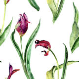 Seamless pattern with Tulips flowers. Watercolor painting Royalty Free Stock Images