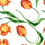Seamless pattern with tulips Stock Photo