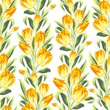Seamless pattern with tulips. Royalty Free Stock Photos