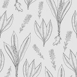 Seamless pattern with turmeric. Medical botanical plant, root, leaves. hand drawn black and white texture. Royalty Free Stock Image