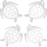 Set of four turtles on the isolated white background. Set of four turtles on the isolated  background Stock Photo