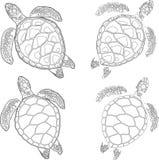 Set of four turtles on the isolated white background. Set of four turtles on the isolated background Stock Photos